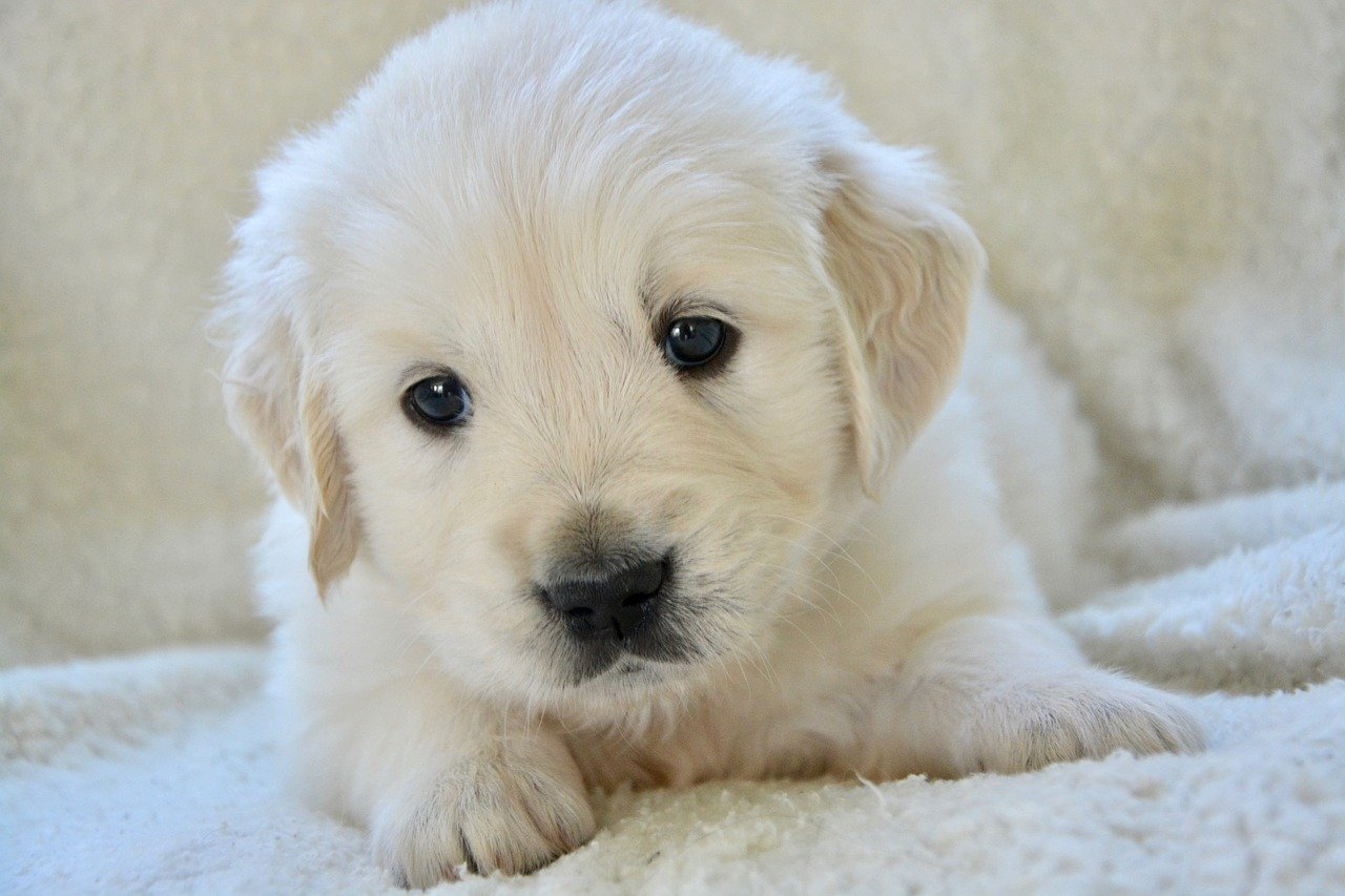 How Can You Buy A Puppy Online?